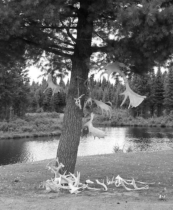 vent qui fait bouger des arbres