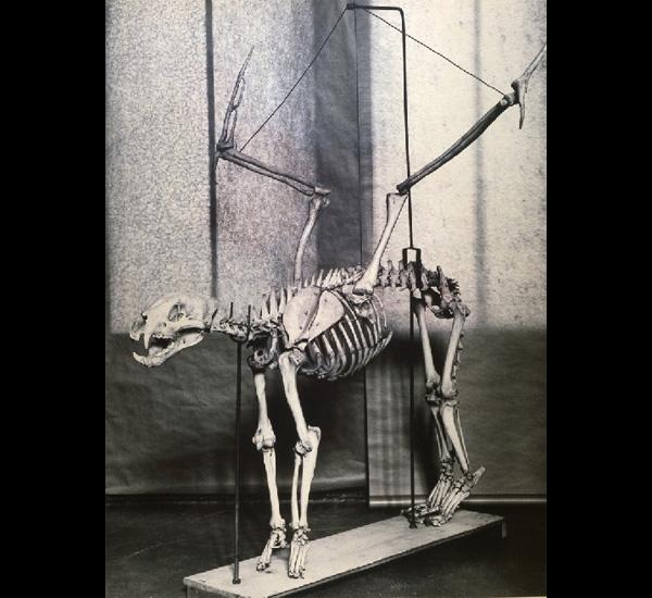Felis Pennatus, 1989, de la série Fauna de Joan Fontcuberta et Pere Formiguera, © Joan Fontcuberta
