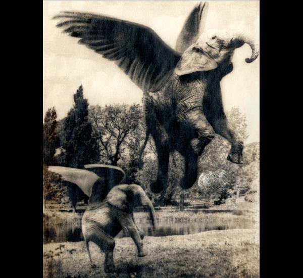 Aerofants (C. A. Bromley), de la série Fauna, 1941