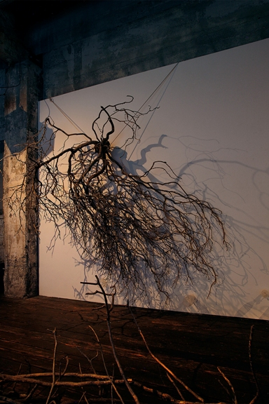 Giant ivy growth 'Chaos'. South gallery wall, photo credit Brian Foulkess